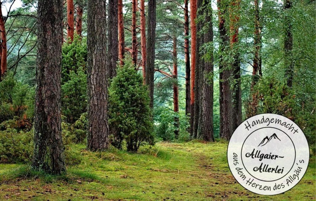 Erfahre im Blogbeitrag von Allgaier-Allerlei alles wissenswerte über den Wunderbaum Zirbe.