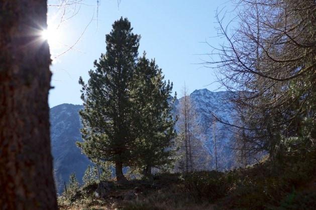 Zirbenholz Deko und Wohnaccessoires mit Zirbenholz aus Südtirol an der grenze zum Allgäu