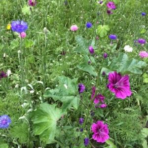Bienenweide Saatgut - Heimische Wildblumen online kaufen im Dekoshop auf www.allgei.de